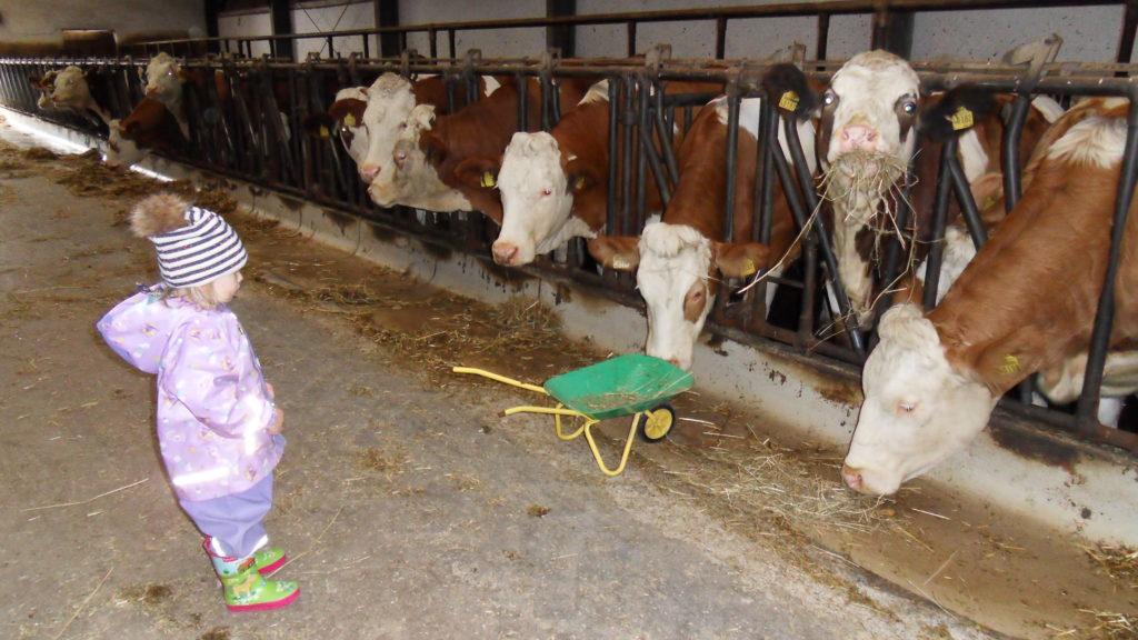 Tagesmutter-Abenteuer-Ausflug - zu Besuch bei den Kühen